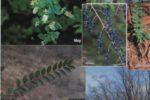 trees-atlanta-4